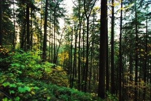 The dark, lush forest of the Pacific Northwest, even in the cold, works as another character in the novel.